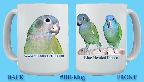Blue Headed Pionus Mug